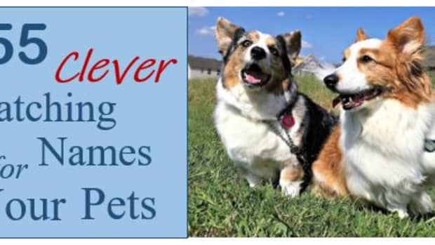 155-clever-matching-names-for-your-pets