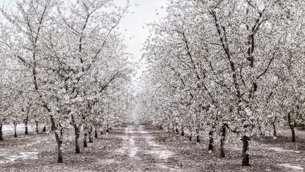 most-popular-blossoms-during-the-month-of-may