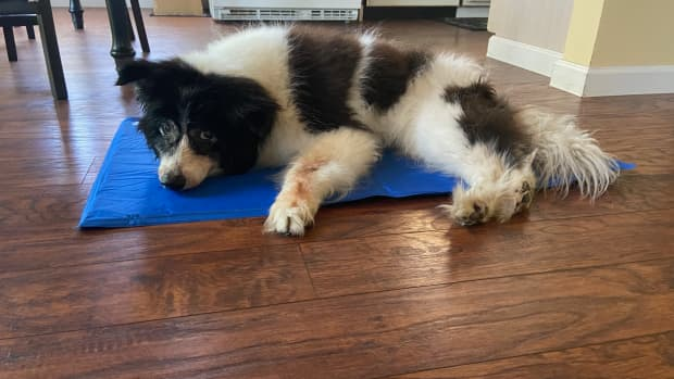 five-ways-to-give-comfort-to-your-senior-dog