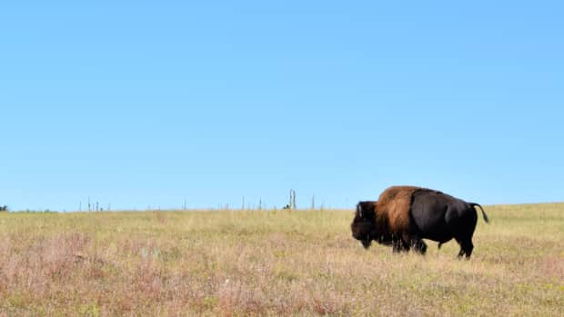 touring-the-south-dakota-black-hills-in-a-day