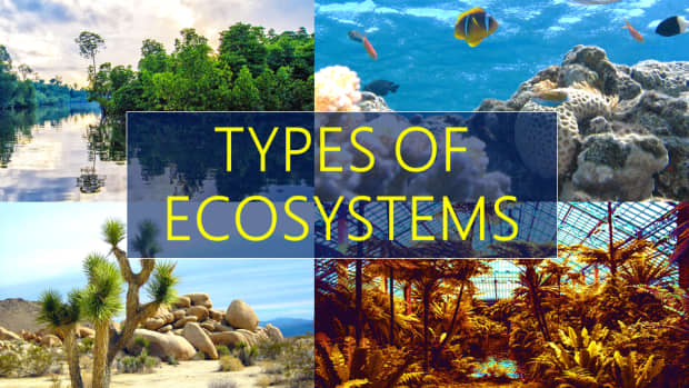 3-different-kinds-of-ecosystems