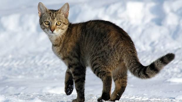 tiger-names-for-striped-cats