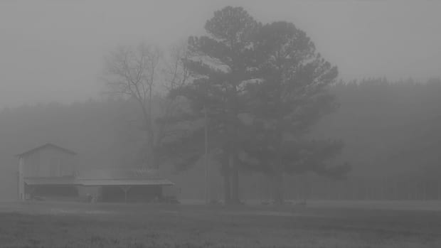 life-in-a-fog