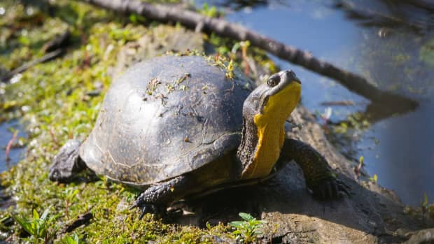 one-hundred-years-of-the-turtle
