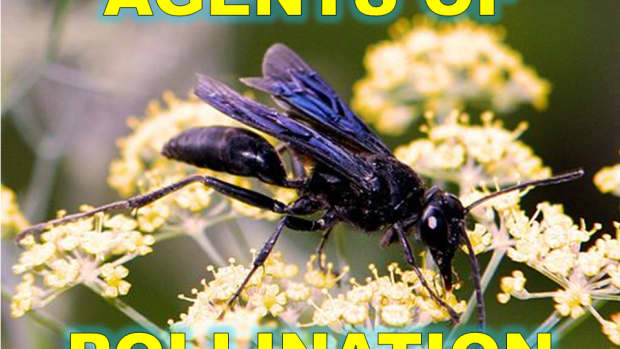 6-agents-of-pollination