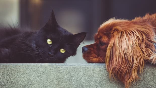 ten-questions-you-need-to-answer-before-getting-your-pet