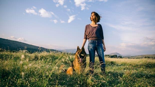 german-shepherd-therapy-dogs