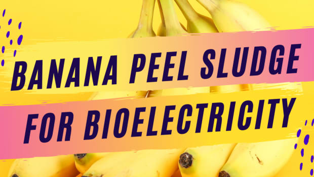 quantitative-study-about-bioelectricity