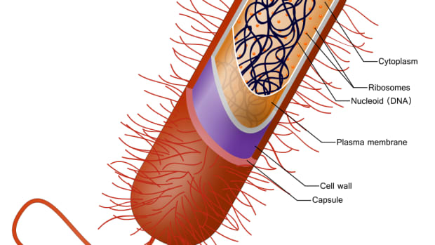 organelles-or-compartments-in-bacteria-and-eukaryotic-cells