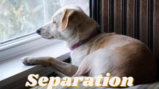 how-do-you-stop-separation-anxiety-in-dogs
