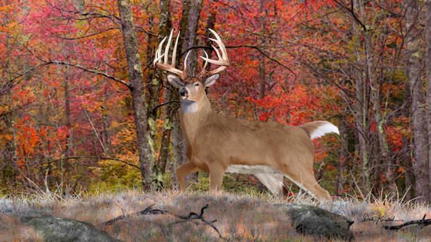 my-memories-daddy-deer-hunter