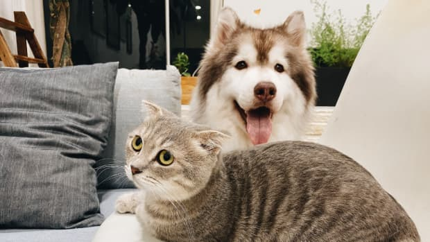 are-you-a-dog-or-a-cat-person-surprising-facts-that-influence-your-career