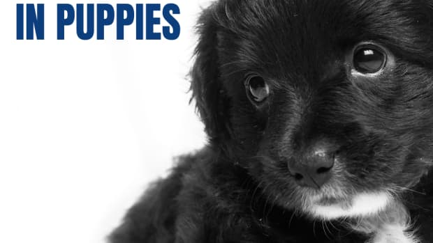 what-causes-diarrhea-in-puppies