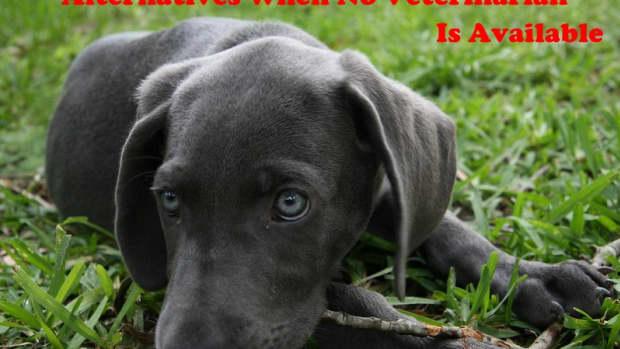 no-emergency-vet-for-my-dog