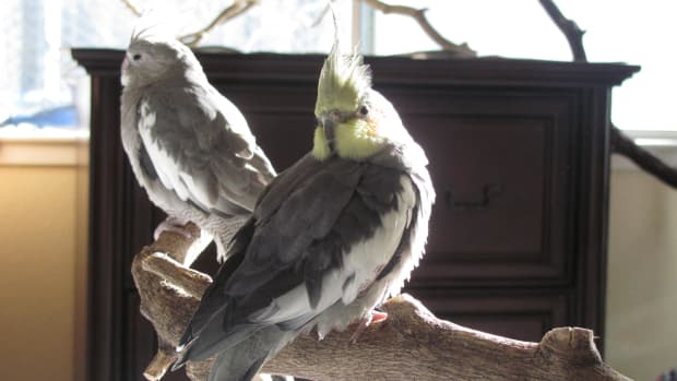 organizing-your-home-for-companion-birds