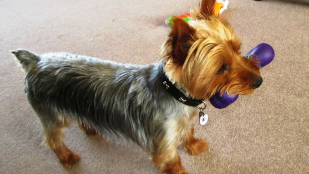 dog-toys-playtime-dogs-which-best-toy-intelligence-playing-with-your-puppy