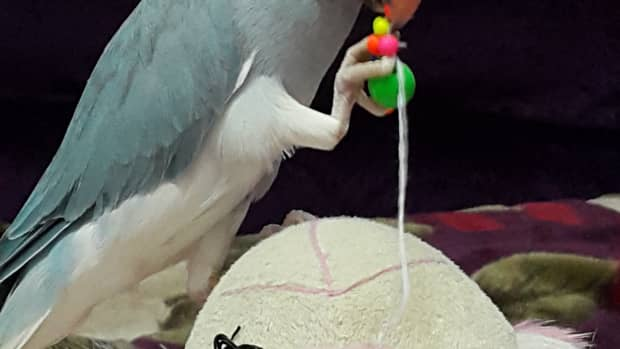 the-memorable-account-of-my-first-pet-bird-and-the-series-of-pets-that-followed