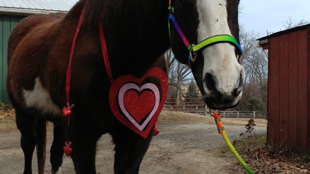horse-owner-ideas-for-february