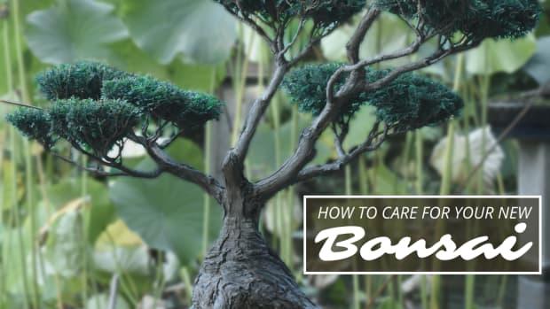 how-to-take-care-of-a-bonsai-tree