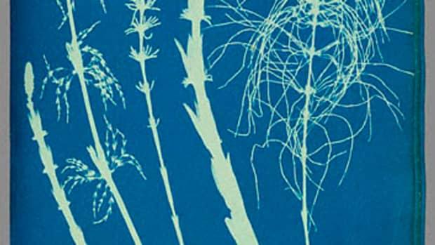 how-to-create-a-cyanotype-print