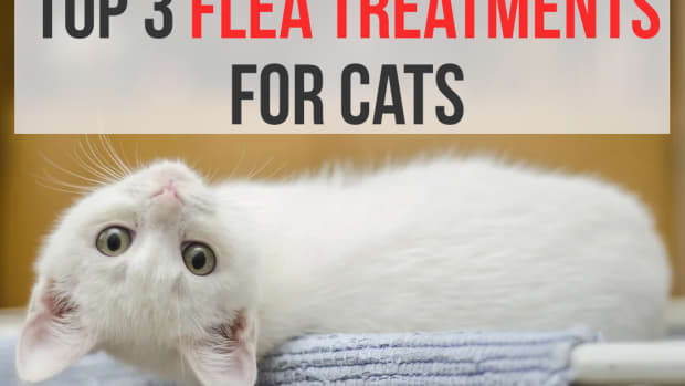 best-flea-treatments-and-prevention-for-cats