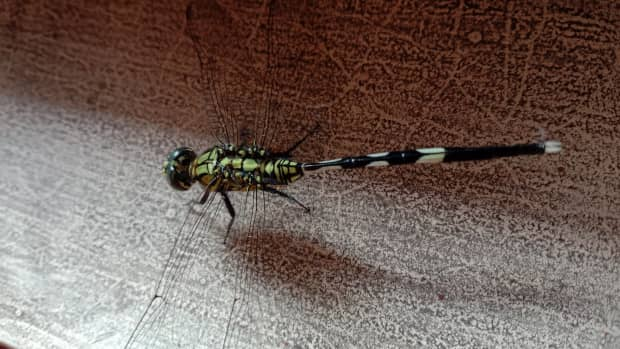 to-the-dragonfly
