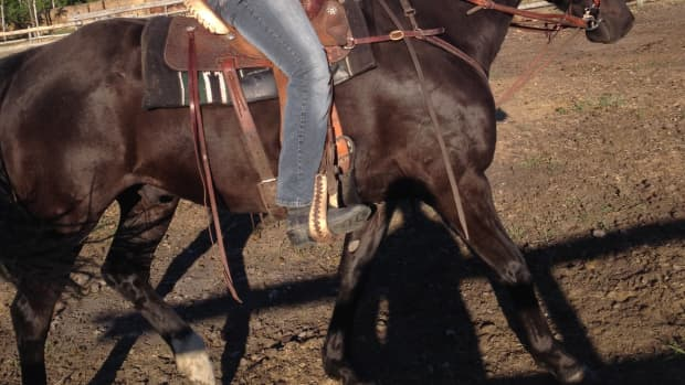 cowgirls-love-thier-horses-a-poem