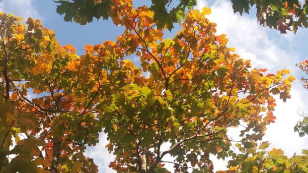 life-in-four-seasons