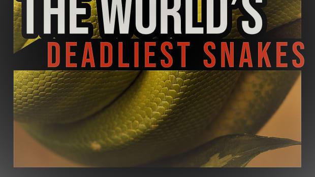 the-worlds-deadliest-snakes