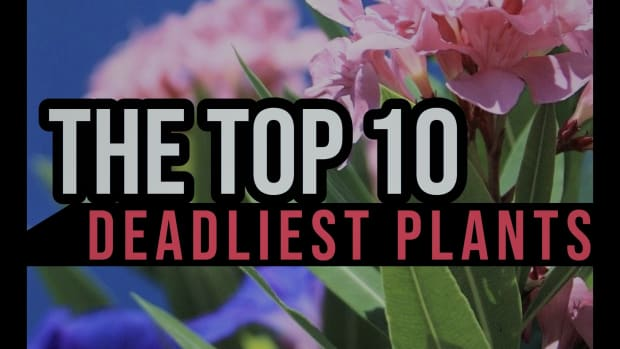 the-top-10-deadliest-plants-in-the-world