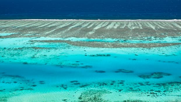 the-valuable-presence-of-the-coral-reefs