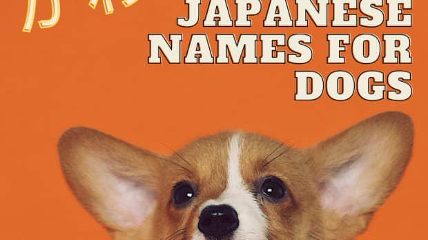 cute-japanese-dog-names