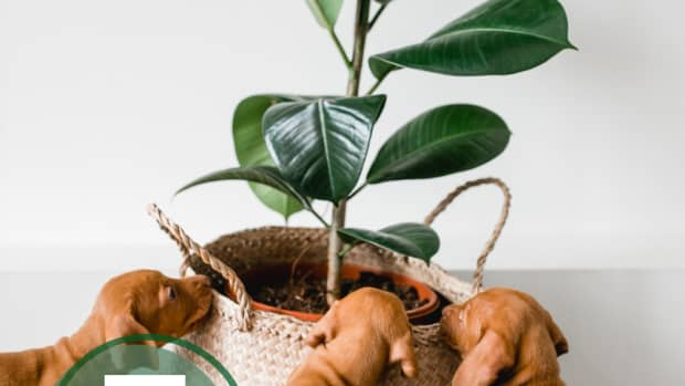 7-pet-friendly-indoor-plants-to-start-using-in-your-home-today-for-cleaner-air-tomorrow