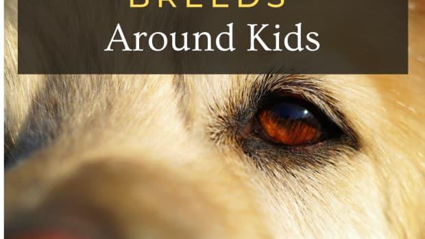 10-worst-dog-breeds-for-kids