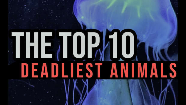 the-top-10-deadliest-animals-in-the-world