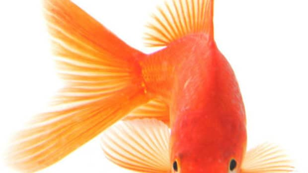 how-to-clean-a-goldfish-bowl-in-five-minutes