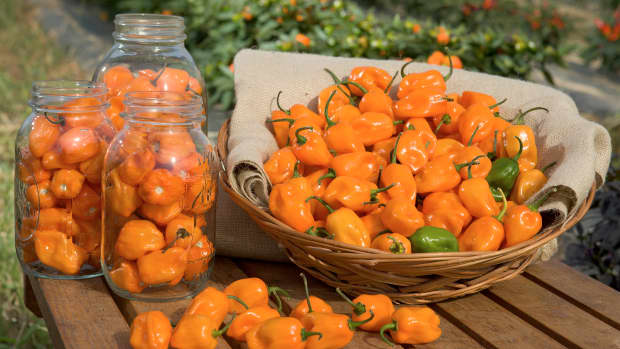 remove-habaneros-from-contact-lenses