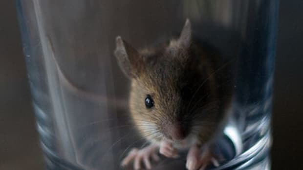 how-mom-saved-my-lost-pet-mouse