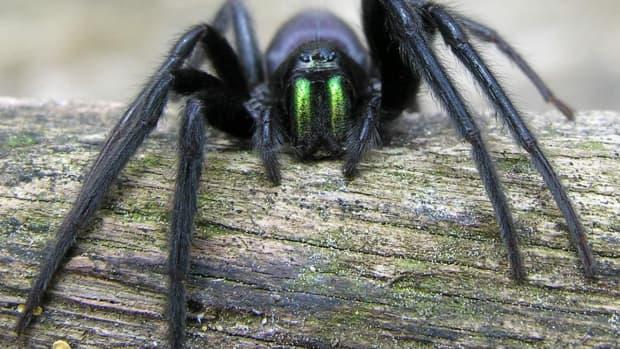 spider-evolution-adaptations-and-ancestors