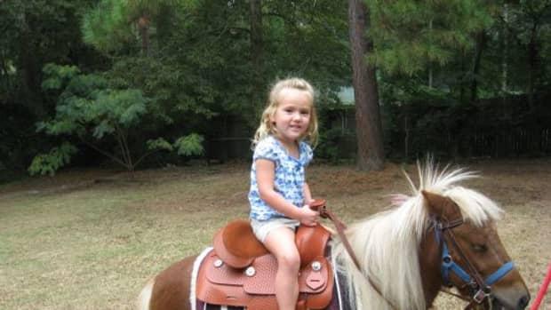 free-horses-horses-for-adoption