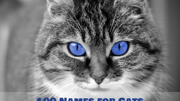 unique-names-for-cats-with-blue-eyes