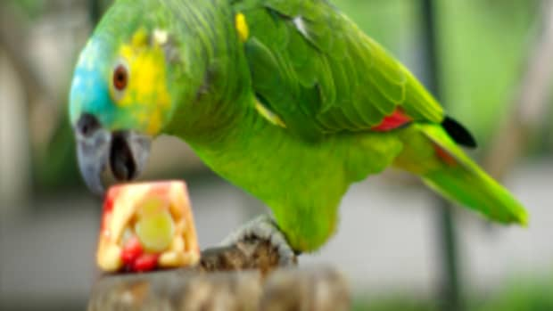 10-tasty-and-healthy-treats-for-pet-birds