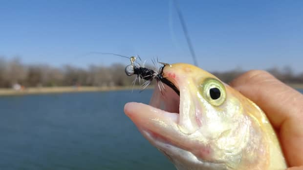 texasrainbowtroutfishing