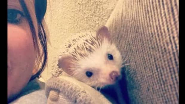 great-toys-for-hedgehog-fun