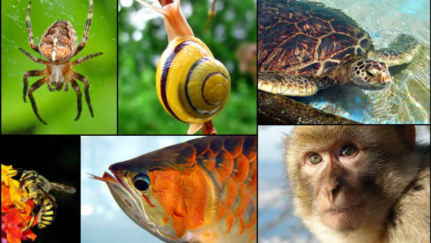 monogamous-animals-might-be-able-to-teach-humans-a-thing-or-two