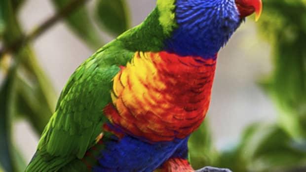the-worlds-most-beautiful-birds-ii