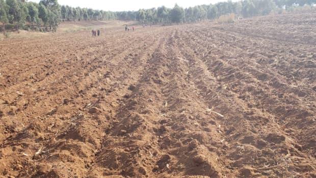 agribusiness-in-kenya
