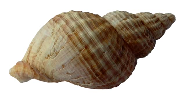 a-shells-journey-from-the-sea