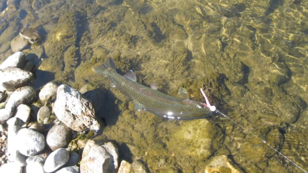 good-trout-bait