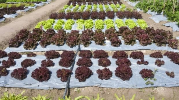 how-to-start-a-hobby-farm